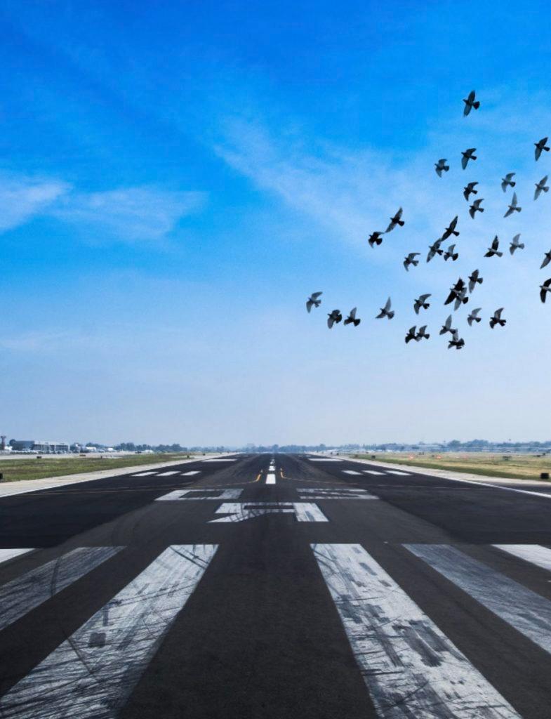 Primetake Wildlife Management for Runways